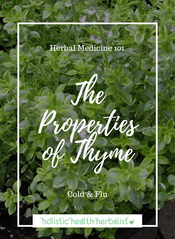 The Properties of Thyme - Learn about the amazing medicinal properties of this humble garden herb and how to use it for cold and flu.