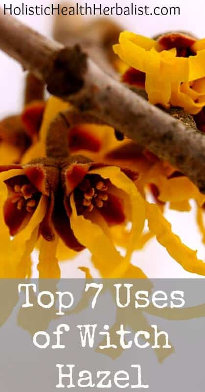 The Top 7 Uses of Witch Hazel - Learn about my favorite uses for witch hazel and why you should have it in your medicine cabinet!