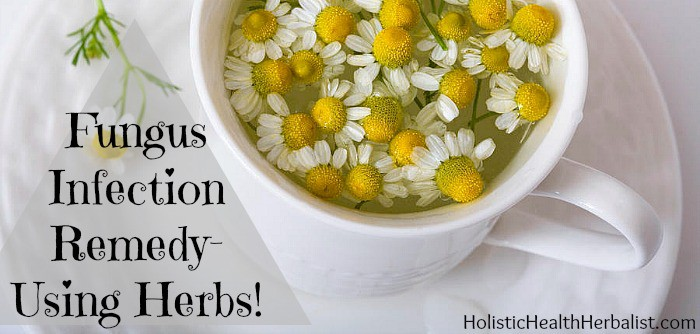 fungus infection remedy with herbs
