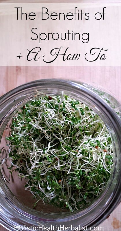 The Benefits of Sprouting + a How To - Learn how to sprout any seed and why you should be eating fresh sprouts daily for their health benefits!