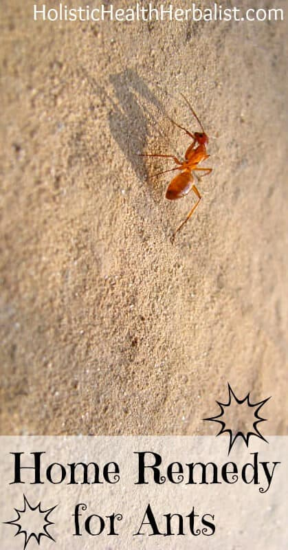 Home Remedy For Ants - Learn about the best natural ant deterrents you probably have in your kitchen!