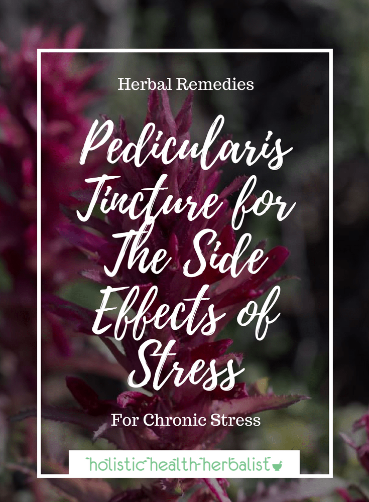 Pedicularis Tincture for The Side Effects of Stress - One of the best herbs for hyper-stressed people.