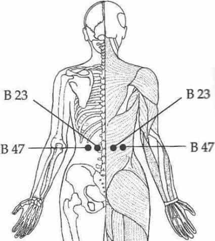 bladder 23 and 47
